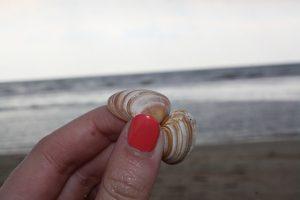 Castricum zee, strand, schelp, koraal