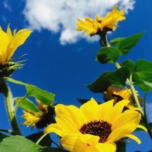 Buitenleven – Maak je tuin lenteklaar!