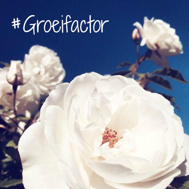 Groeifactor week 3 – Talent ontdekken en laten groeien