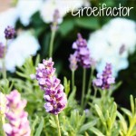 Groeifactor week 6 – Spread the love, familie en vriendschap
