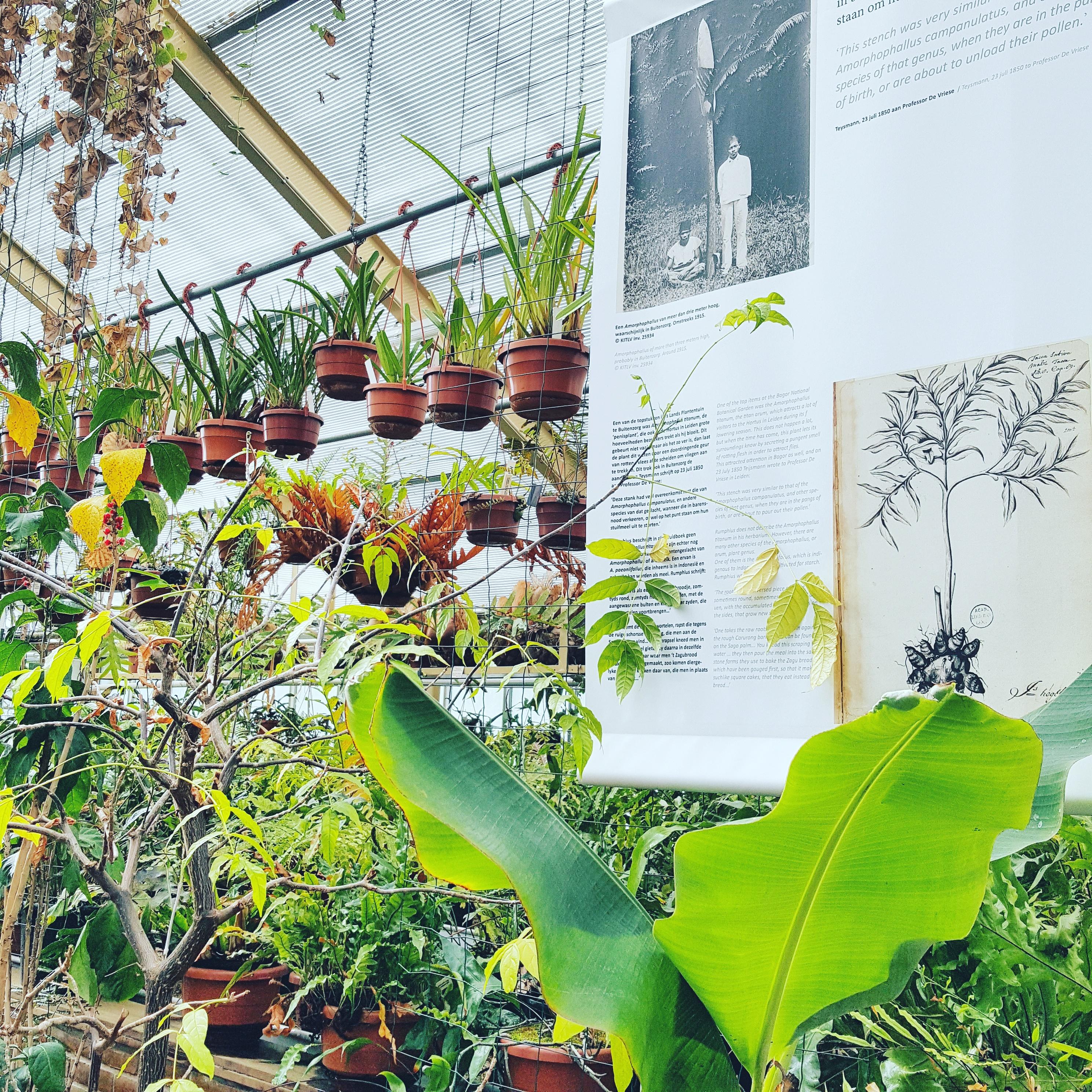 Hotspot: Hortus Botanicus in Leiden
