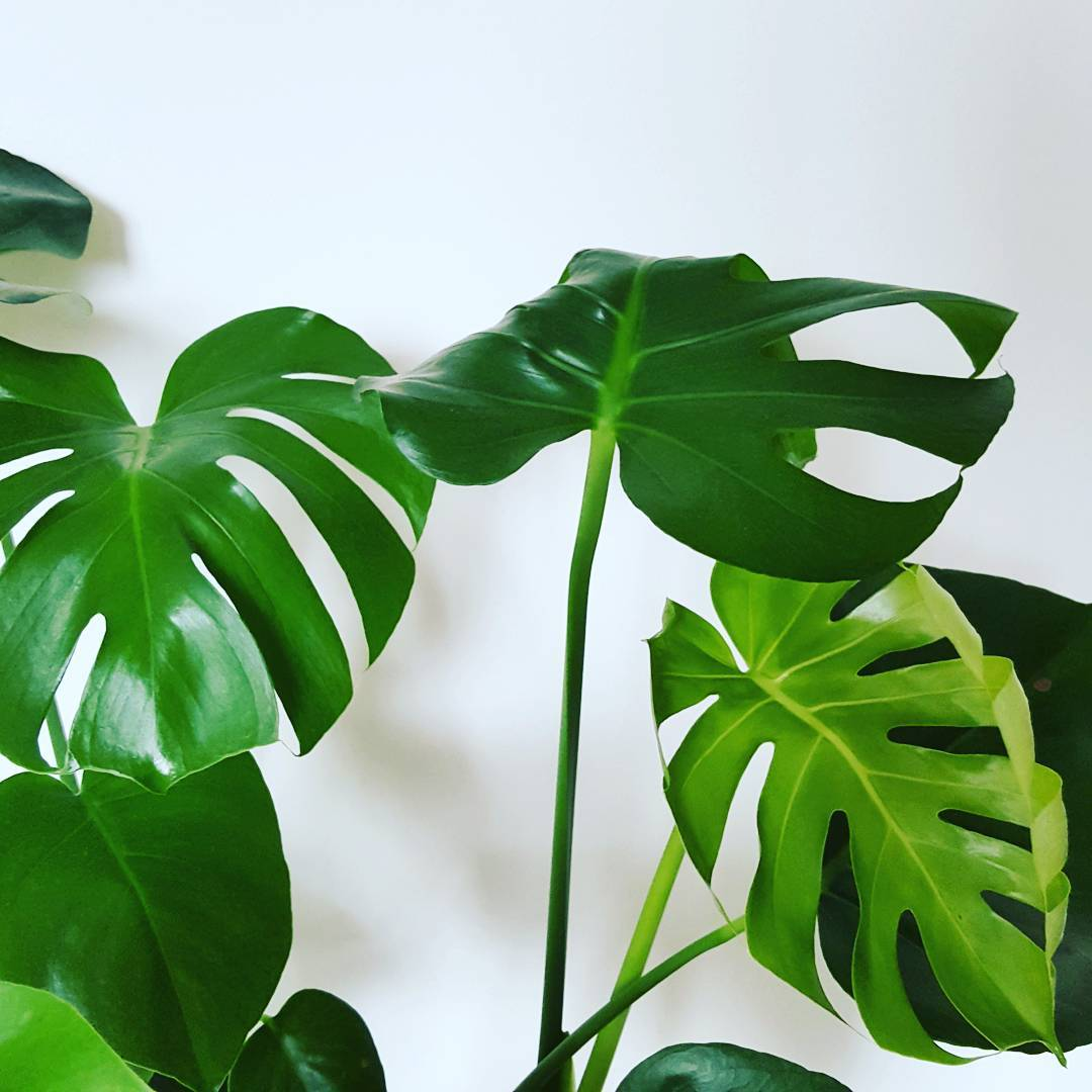 Makkelijke planten om in leven te houden (weinig onderhoud)