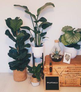 Nieuwe planten voor op mijn kantoor