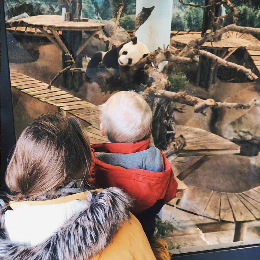 panda dagmar valerie lucas