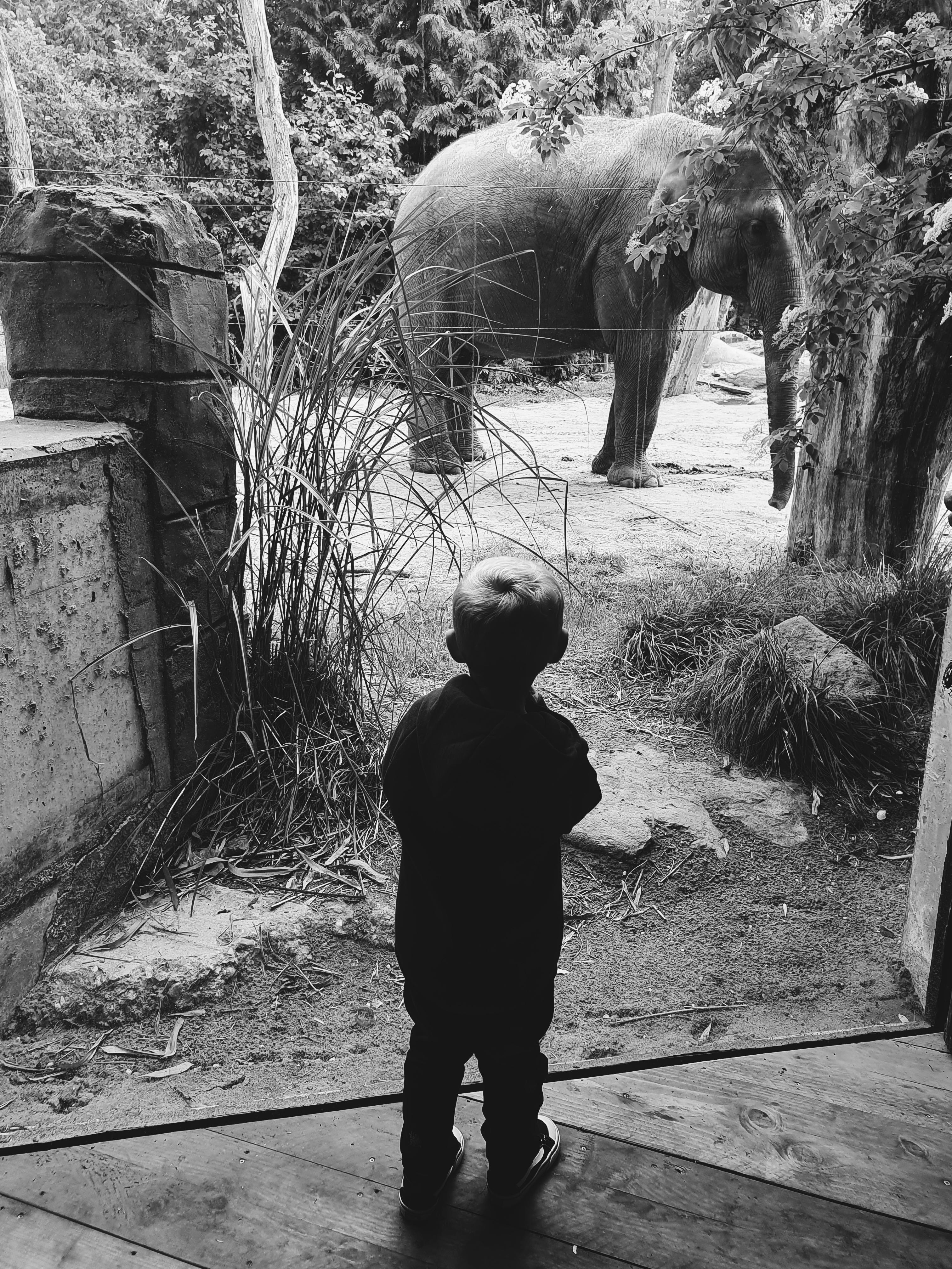 Lucas olifant 2,5 jaar